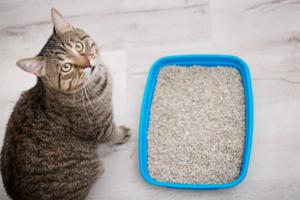 Best Cat Litter