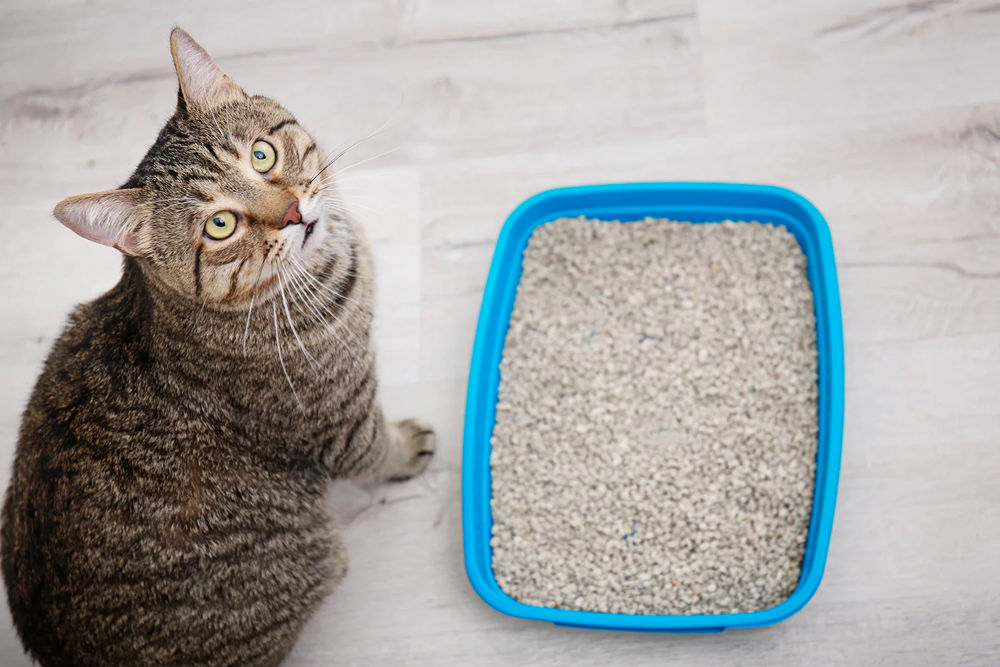 Best Cat Litter – Top Pick Reviews and Buying Guide