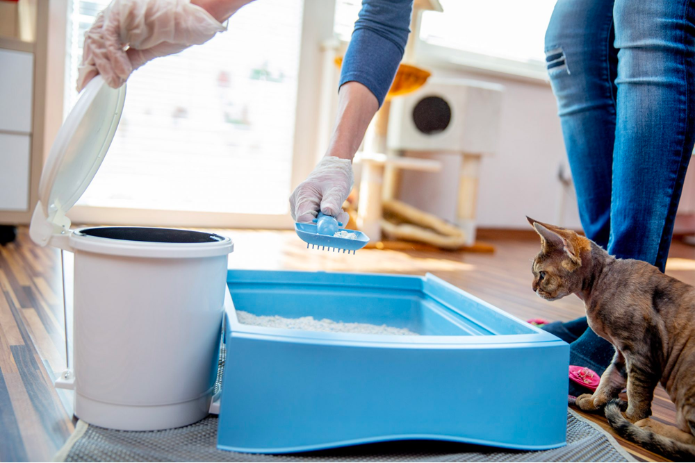 How to Clean Cat Urine and Controlling Cat Litter Odor