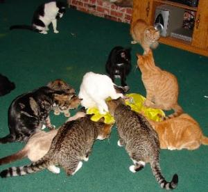 multiple-cat-household
