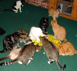About Us and The House Full Cat Sanctuary